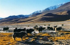 Khunjerab National Park
