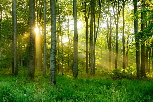Kundas Forest