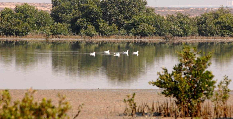 Al Zorah Natural Reserve